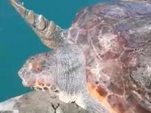 Inquinamento marino da plastica: breve storia triste...con lieto fine