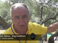 Intervista a Vincenzo Spina - I sentieri dell'Olio