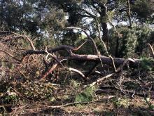 Ilaria Falconi: cosa sta accadendo nella pineta di Procoio ?