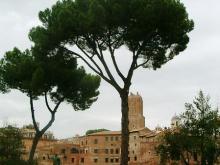 Ilaria Falconi: il nuovo Regolamento del Verde a Roma, cosa sta succedendo?